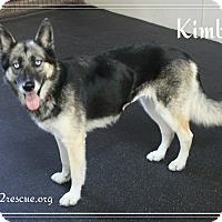 Adopt A Pet :: Kimber - Rockwall, TX