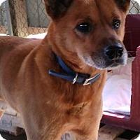 Adopt A Pet :: ROGUE - Cadiz, OH
