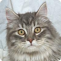 Adopt A Pet :: Michael N - Sacramento, CA