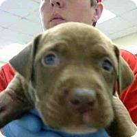 Adopt A Pet :: A272915 - Conroe, TX
