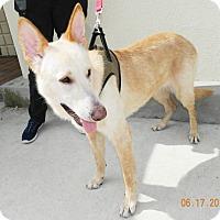 Adopt A Pet :: Goldie - Umatilla, FL