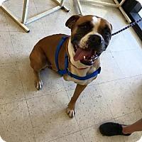 Adopt A Pet :: Skipper - Cantonment, FL