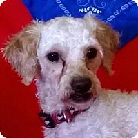 Adopt A Pet :: Jimmy - Campbell, CA