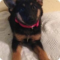 Adopt A Pet :: Anya - Boston, MA