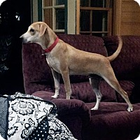 Adopt A Pet :: Elbert - PENDING - Grafton, WI