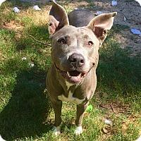 Adopt A Pet :: Ellie - Vancouver, BC