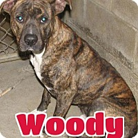 Adopt A Pet :: #237 Woody - sponsored - Lawrenceburg, KY