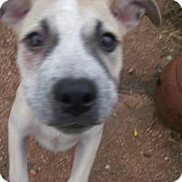 Adopt A Pet :: Trixie - Buchanan Dam, TX