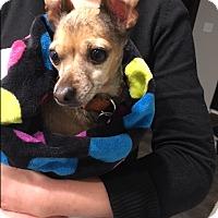 Adopt A Pet :: Fawn - Jamestown, MI