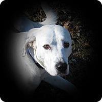 Adopt A Pet :: Bubba - Springfield, MO