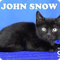 Adopt A Pet :: John Snow - Carencro, LA