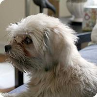 Adopt A Pet :: Lilly! - New York, NY