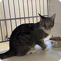 Adopt A Pet :: Leda - Winter Haven, FL