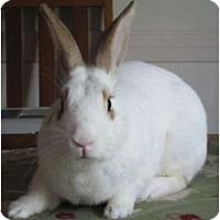 Adopt A Pet :: Casanova - Williston, FL