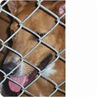 Adopt A Pet :: Vera - Scottsdale, AZ