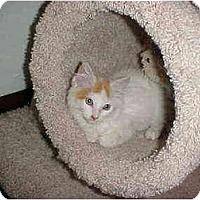 Adopt A Pet :: Baxter - Quincy, MA