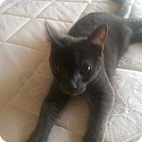 Adopt A Pet :: Karsten - Phoenix, AZ