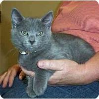 Adopt A Pet :: Aramis - Reston, VA
