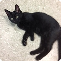Adopt A Pet :: Windsor - Byron Center, MI