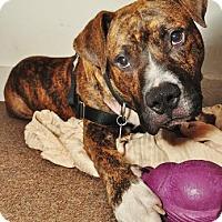 Adopt A Pet :: Ziggy - Atlanta, GA