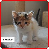 Adopt A Pet :: Skittles - Miami, FL