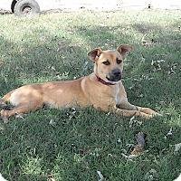 Adopt A Pet :: Zoe - Okmulgee, OK
