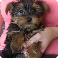 Adopt A Pet :: Tiny Town - Salem, NH