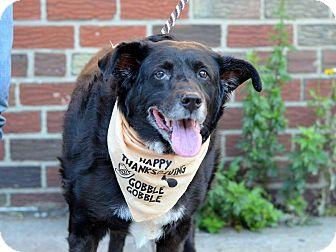 Labrador Retriever Mix Dog for adoption in Sagaponack, New York - Benny