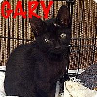 Adopt A Pet :: Gary - Waycross, GA