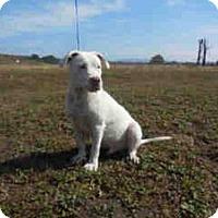 Adopt A Pet :: ASTRO - McKinleyville, CA