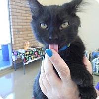 Adopt A Pet :: Bruce - San Jose, CA