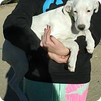 Adopt A Pet :: GEORGE - Corona, CA