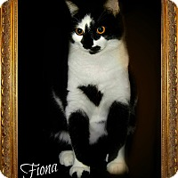 Domestic Shorthair Cat for adoption in McEwen, Tennessee - Fiona