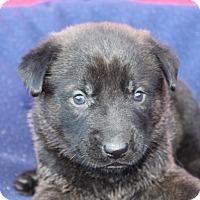 Adopt A Pet :: Germain - Waldorf, MD