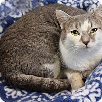 Adopt A Pet :: Pearl - Carencro, LA