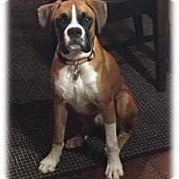 Adopt A Pet :: Zeke - Brentwood, TN