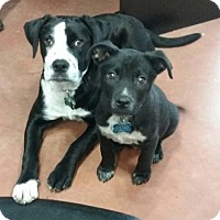 Adopt A Pet :: Hansel and Gretel - Coldwater, MI