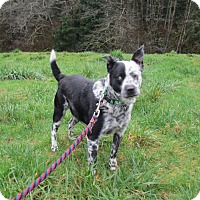 Adopt A Pet :: Oreo - Tillamook, OR