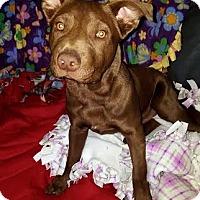 Adopt A Pet :: Oberyn aka Oby-Adopted! - Detroit, MI