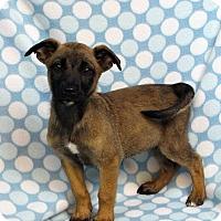 Adopt A Pet :: AILEEN - Westminster, CO