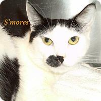 Adopt A Pet :: Smores - El Cajon, CA