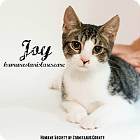 Adopt A Pet :: Joy - Modesto, CA