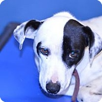 Adopt A Pet :: Folly - Henderson, NC