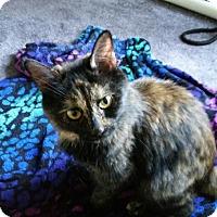 Adopt A Pet :: Daisy - Butner, NC