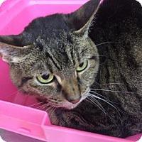 Adopt A Pet :: Peony Rose - Spokane, WA