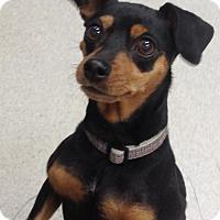Adopt A Pet :: Brandy - Spokane, WA