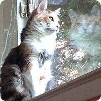 Adopt A Pet :: Alice - Oakdale, CA
