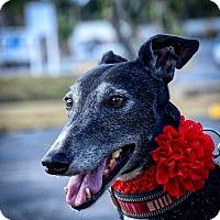 Adopt A Pet :: M's Freeway - Sarasota, FL