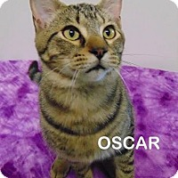 Adopt A Pet :: Oscar - Mountain View, AR