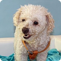 Adopt A Pet :: Bosley - Palm Springs, CA